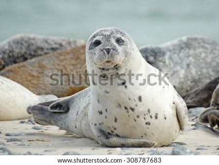 Looking seal                             - stock photo