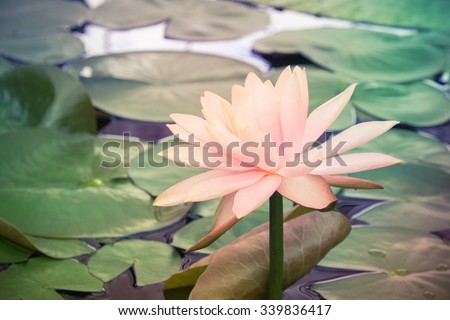 lotus flower with filter effect retro vintage style - stock photo