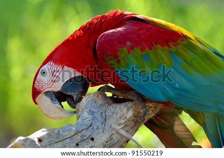 macaw sitting on branch - stock photo