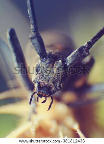 macro of a beetle. Shallow DOF Vintage colored picture - stock photo