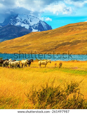 Magic light of sunset. Herd of mustangs on the shore of Laguna Azul - stock photo