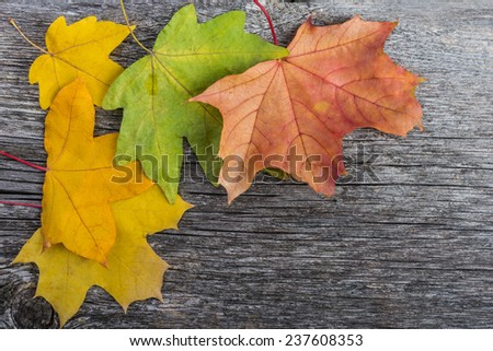 Maple leaves background. Autumn leaves on wooden background with copy-space  - stock photo