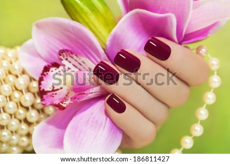 Maroon manicure on female hand with Orchid and a pearl bracelet . - stock photo