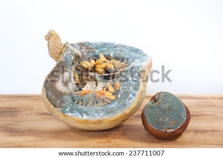 Moldy pumpkin and quince on the table - stock photo