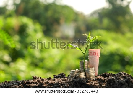 Money growth concept plant growing out of coins - stock photo