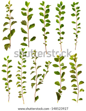 100 Mpx set objects: bushes branch with leaves isolated on white background - stock photo