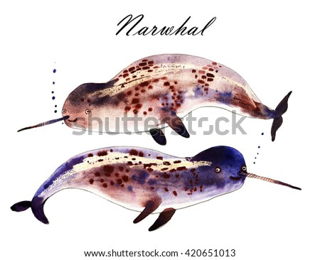 Narwhal, watercolor cartoon illustration isolated on white background - stock photo