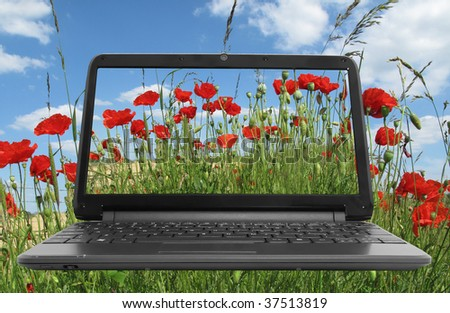 Netbook (notebook) with poppies on screen in a field of poppies - stock photo