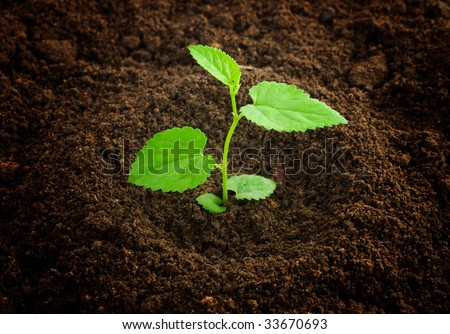 new born plant - stock photo