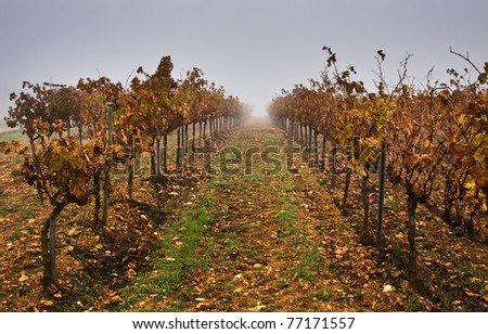 Nice vineyard - stock photo