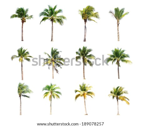 12 of coconut trees on white background - stock photo