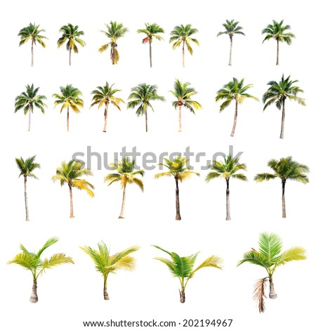 24 of coconut trees on white background  - stock photo