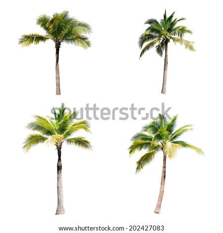 4 of coconut trees on white background  - stock photo