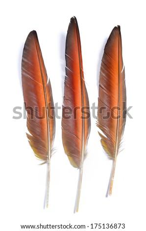 3 of Real MACAW bird Feathers. Natural colors:Red, Brown, Grey. Isolated on white background.  - stock photo