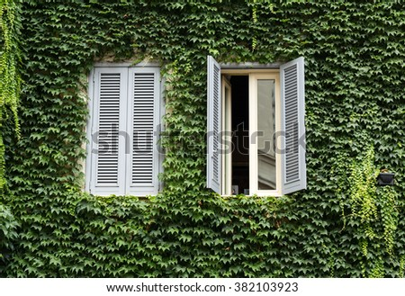 Old house covered by ivy in Rome near Campo dei Fiori - stock photo