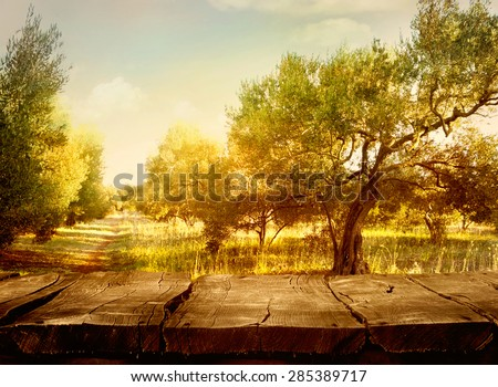 Olive orchard. - stock photo