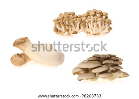 oyster mushrooms on White Background - stock photo