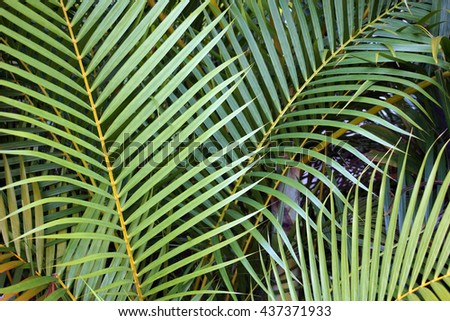 Palm leaves background                               - stock photo