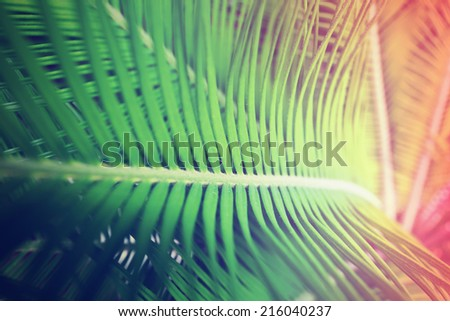 palm leaves ,chromo therapy color - stock photo