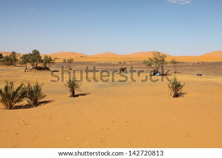 Palm tree in Erg Chebbi, at the western edge of the Sahara Desert - stock photo