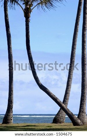 4 palm trees with one distinctly leaning left - stock photo