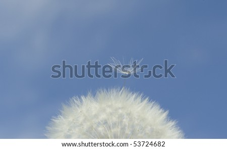 Part of blow ball. - stock photo
