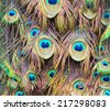 peacock feather - stock photo