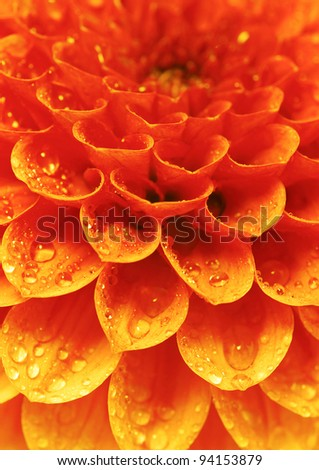 petals of a flower - stock photo