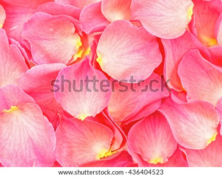 petals of roses background - stock photo