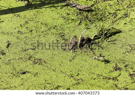 photographed the territory in which is located the marsh, the end of the summer season, open space, defocus - stock photo