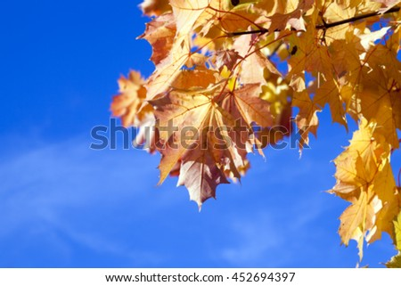 photographed trees and foliage in the autumn, the location - a park, defocus - stock photo