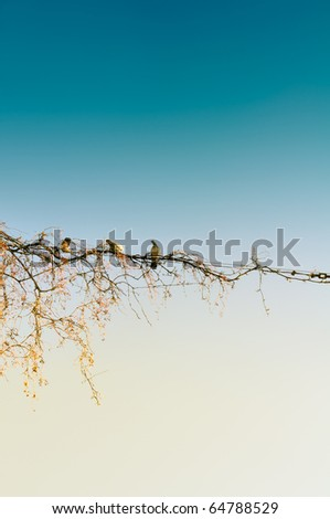 Pigeons Sitting on Wire on Blue Background - stock photo
