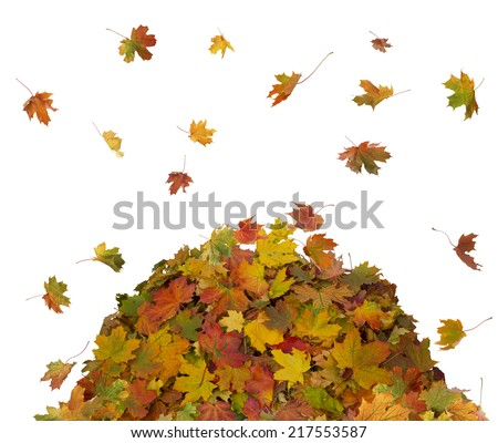 Pile of Fall Leaves  - stock photo