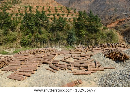 Pile of Timber Logs in Pine Forest - stock photo