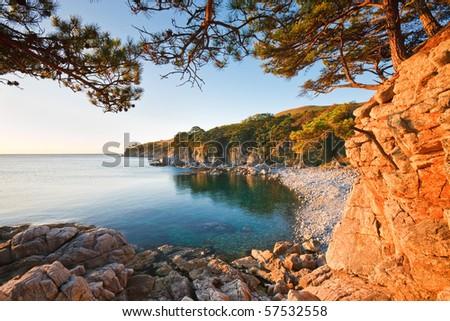 """Pine grave"". Cedar on the shores of the sea. - stock photo"