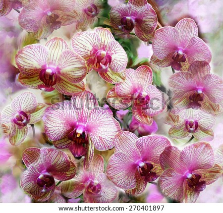 Pink and lilac orchid flowers on grunge stained colorful hazy background   - stock photo