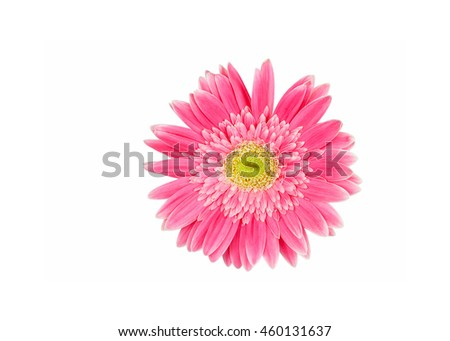 pink and yellow gerbera flower isolated on a white background - stock photo