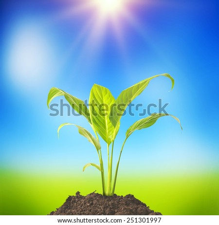 plant tree growing seedling in soil on blue background  - stock photo