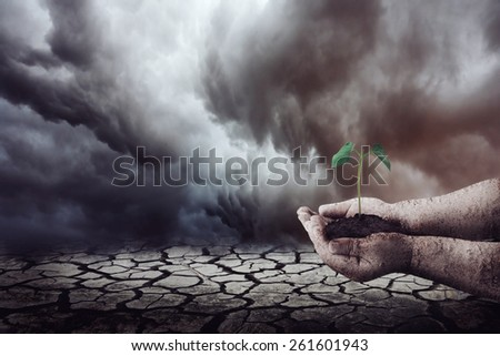 Planting on dry land - stock photo