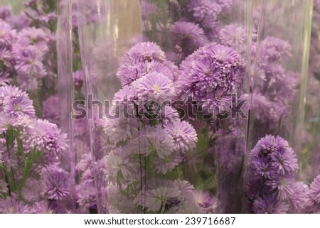 purple flower in plastic bag , flower shop in market , pink lily with plastic cover background in flower shop , export business background, - stock photo