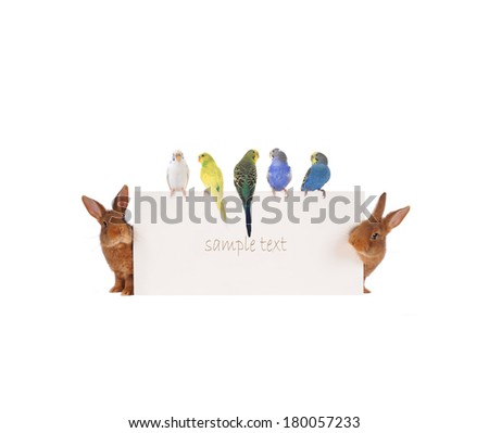 Rabbit and budgie with with a white background for text drawing - stock photo