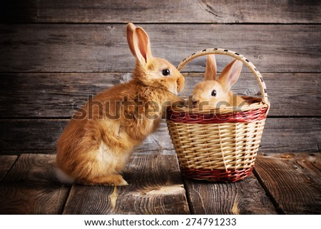 rabbits on wooden background - stock photo