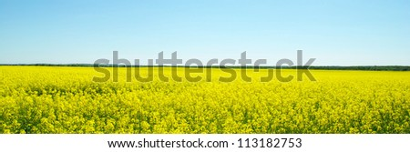 Rape field and clouds in sky - stock photo