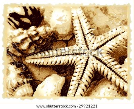 raster cockleshell and starfish on the beach - stock photo