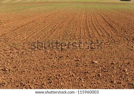 Reaped field - stock photo