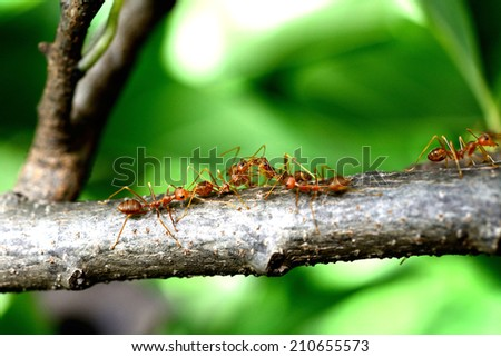 Scale insects stock photos illustrations and vector art