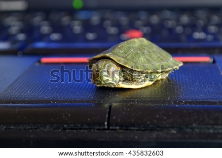 Red ear turtle on the computer keyboard   - stock photo