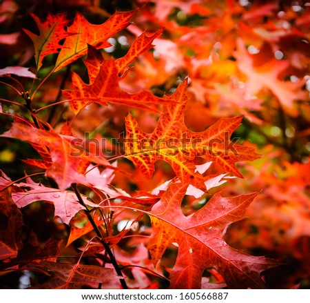 Red maple leaves with beautiful bokeh and water droplets. Shadowed angles. - stock photo