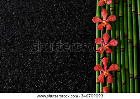 red orchid and bamboo grove â??black background - stock photo