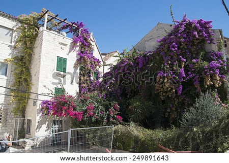 rich in flowers and plants on older homes - stock photo